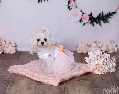 צילום חיות מחמד- כלבה מתוקה