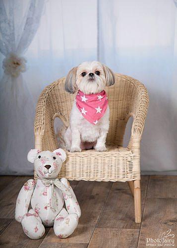 צילום חיות מחמד - צילום כלבה מתוקה בסטודיו מקצועי