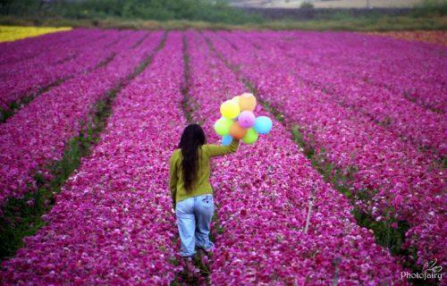 צילום אומנותי בשדה פרחים